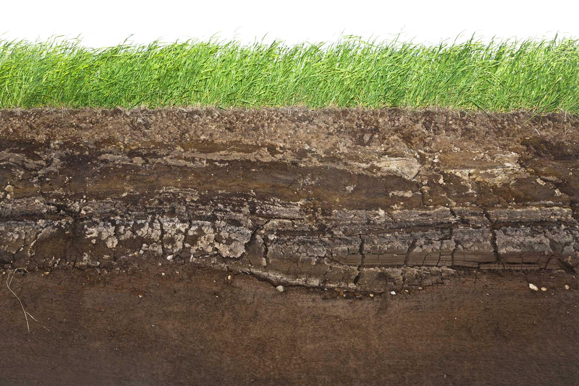 Hemp Cleans Soil and Air, but Beware…