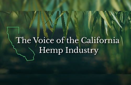 Will Kleidon Named Chairman of California Hemp Council